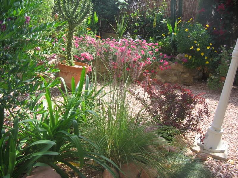 Mis dos pequeños jardines Jardiin161