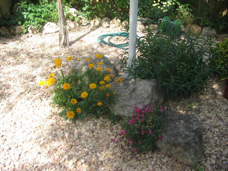 Mis dos pequeños jardines Jardiin173