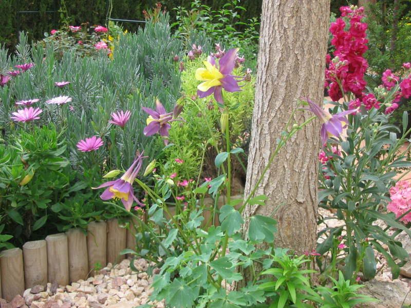 Mis dos pequeños jardines Flores039