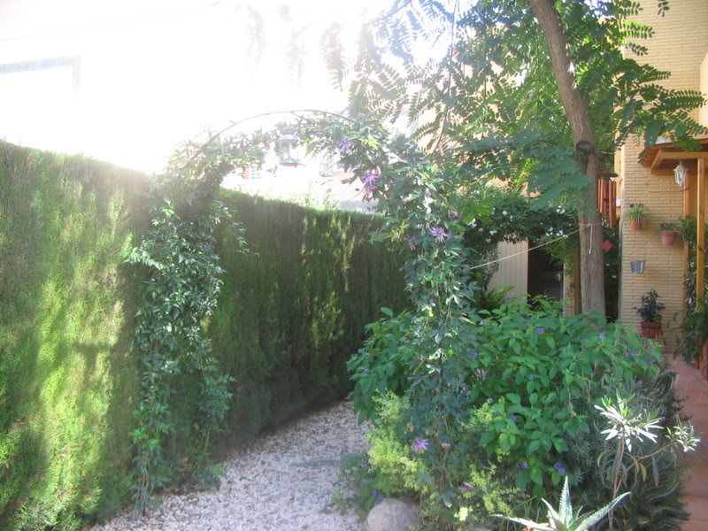 Mis dos pequeños jardines Jardiin001