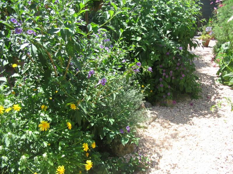 Mis dos pequeños jardines - Página 3 Jardiin213