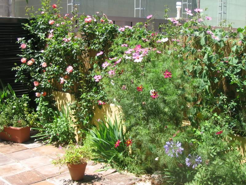 Mis dos pequeños jardines - Página 3 Jardiin214