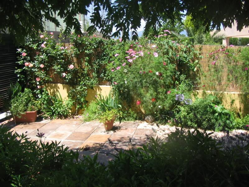 Mis dos pequeños jardines - Página 3 Jardiin217
