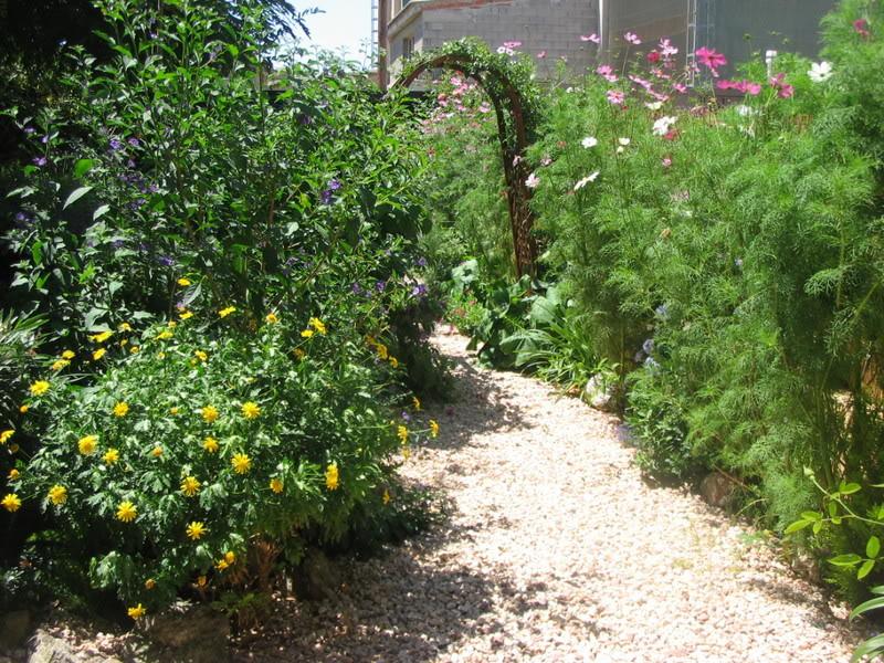 Mis dos pequeños jardines - Página 3 Jardiin218
