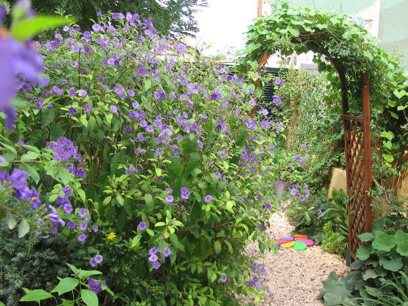 Mis dos pequeños jardines - Página 6 Jardiin280