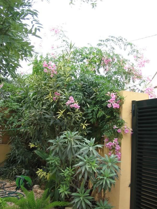 Mis dos pequeños jardines - Página 6 Jardiin281