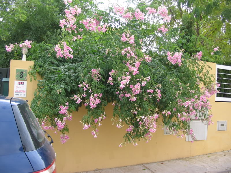 Mis dos pequeños jardines - Página 6 Jardiin282