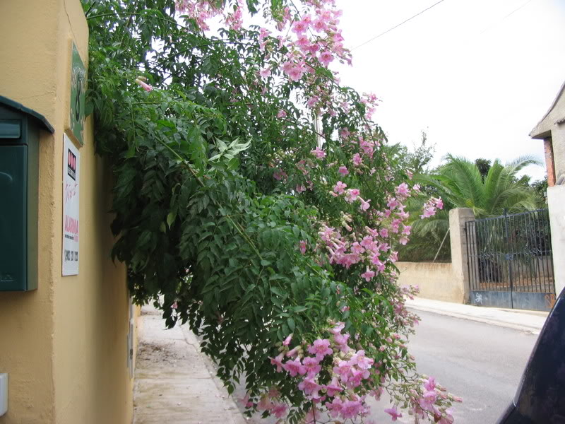 Mis dos pequeños jardines - Página 6 Jardiin283