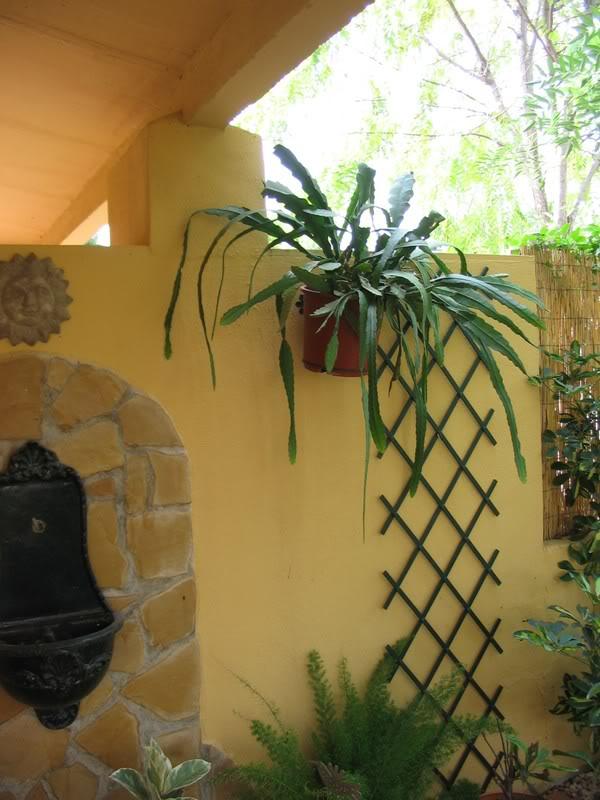 Mis dos pequeños jardines - Página 6 Jardiin284