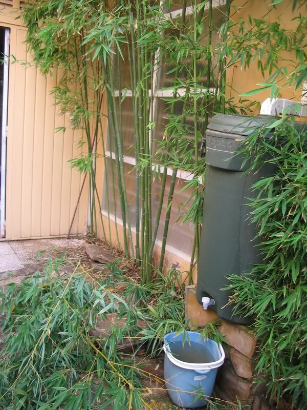 Mis dos pequeños jardines - Página 6 Jardiin295