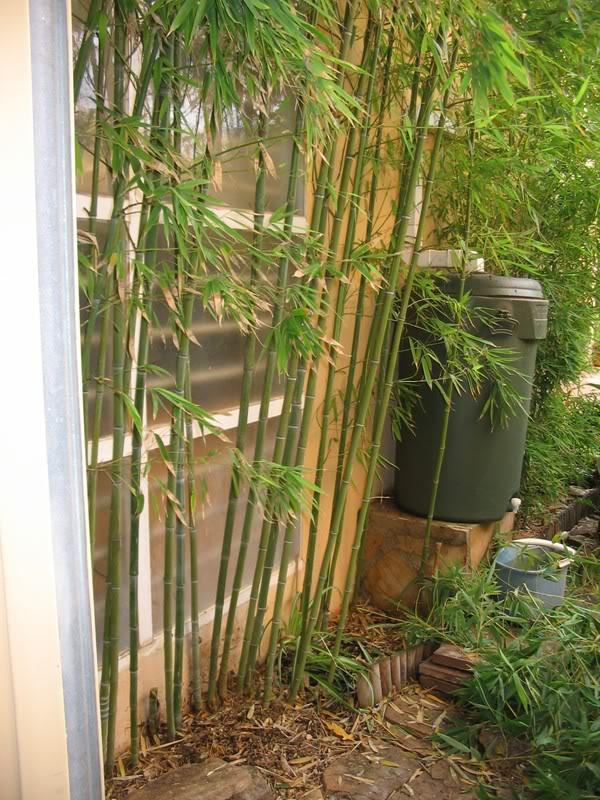 Mis dos pequeños jardines - Página 6 Jardiin296