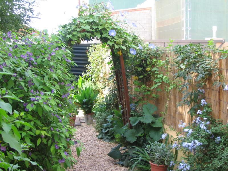 Mis dos pequeños jardines - Página 7 Jardiin299