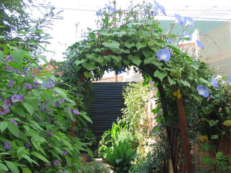 Mis dos pequeños jardines - Página 7 Jardiin300