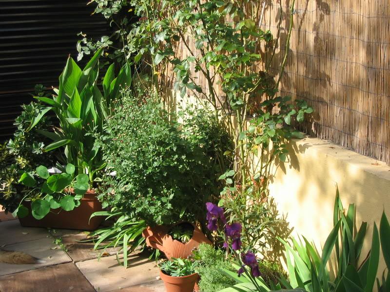 Mis dos pequeños jardines - Página 7 Jardiin301