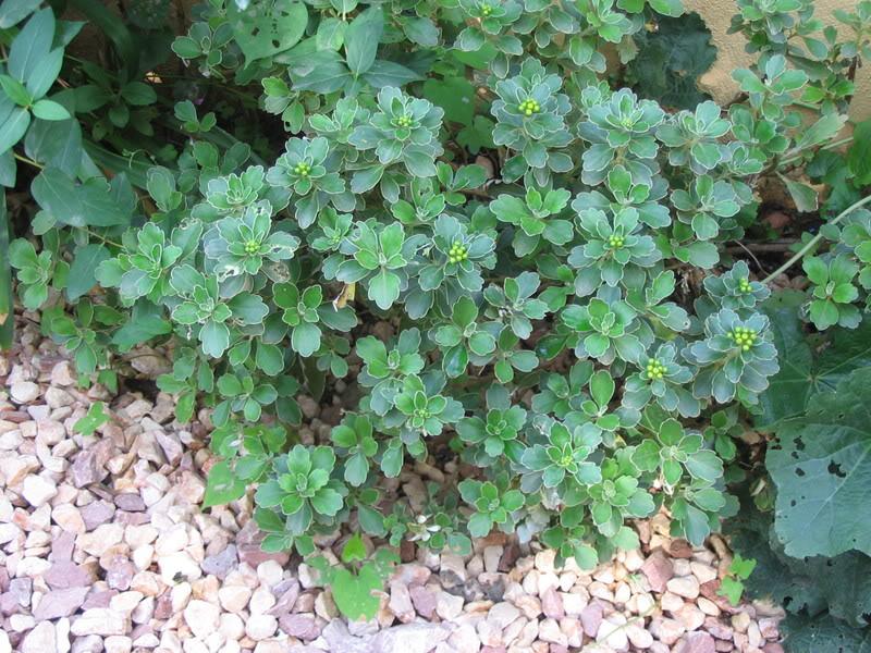 Mis dos pequeños jardines - Página 7 Jardiin302