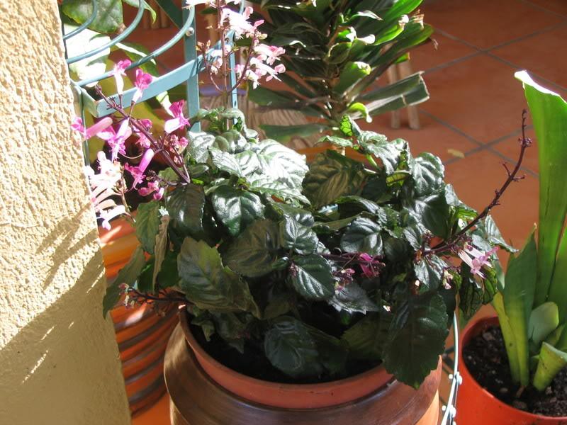 Mis dos pequeños jardines - Página 7 Jardiin303