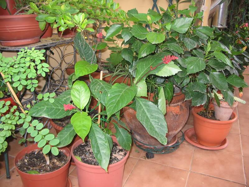 Mis dos pequeños jardines - Página 7 Jardiin304