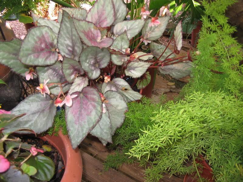 Mis dos pequeños jardines - Página 7 Jardiin305
