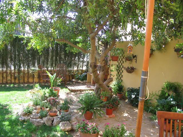 Mis dos pequeños jardines Jardintrasero013