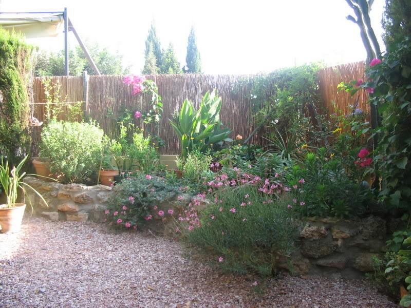 Mis dos pequeños jardines Plantas002-4