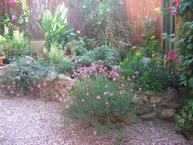 Mis dos pequeños jardines Plantas004-4