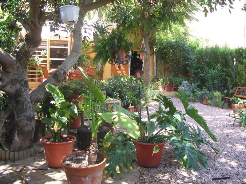 Mis dos pequeños jardines Plantas015-1