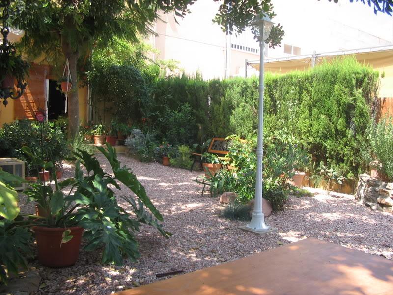 Mis dos pequeños jardines Plantas016-1
