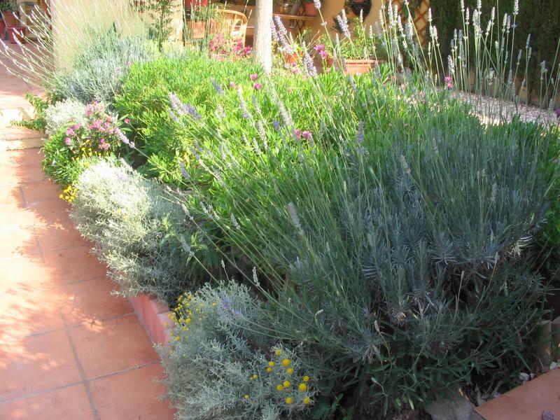 Mis dos pequeños jardines Plantas034