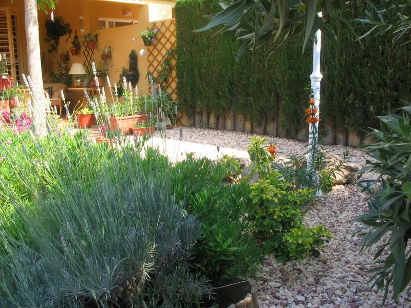 Mis dos pequeños jardines Plantas035