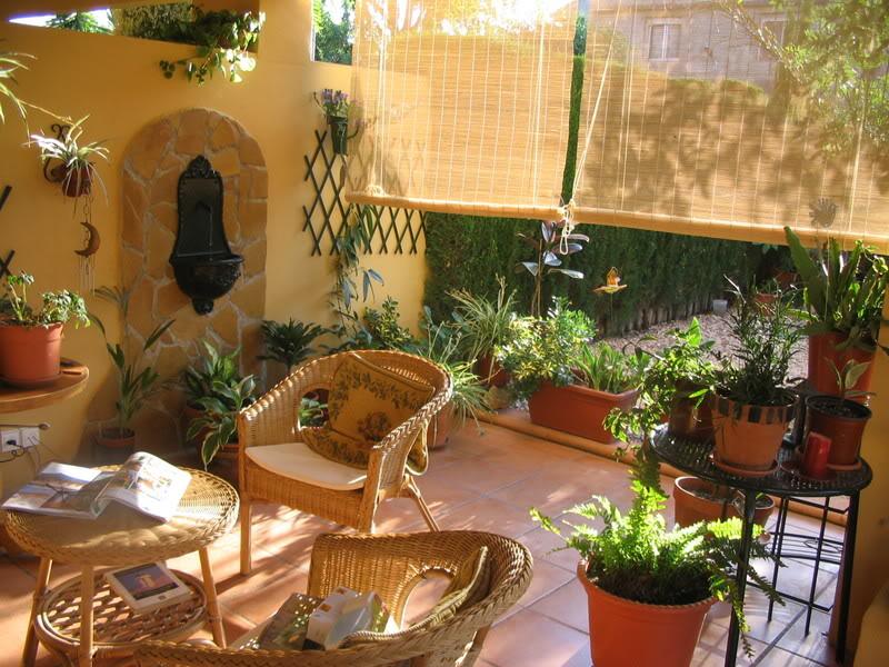 Mis dos pequeños jardines Plantas081