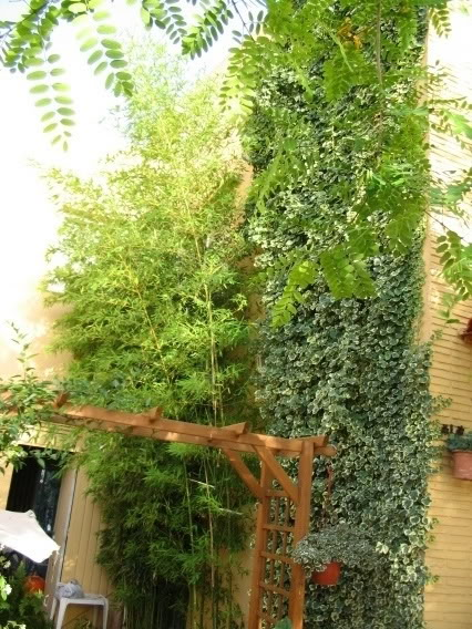 Mis dos pequeños jardines Plantasyflores007