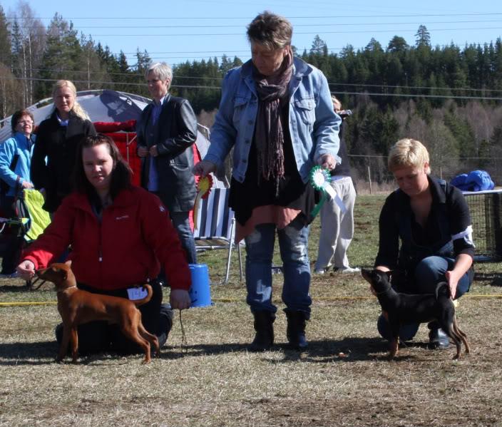 Valpeshow Hønefoss 2. mai 041-2