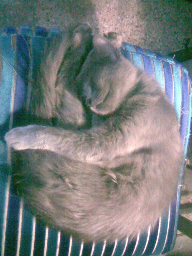 Gatos Negros, Simbolo de mala Suerte? Imagen134