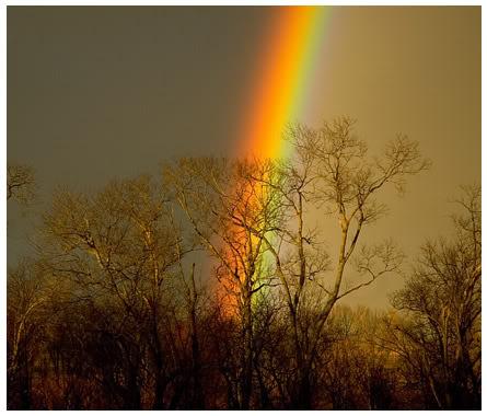 صباح الخير يـا فلسطين Art_rainbow