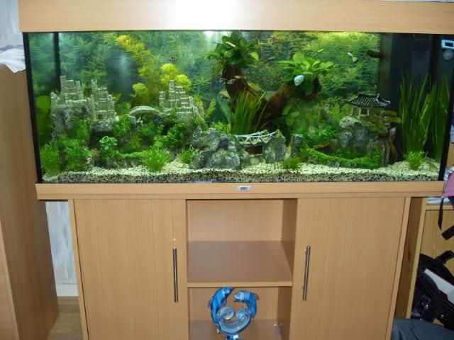 Présentation aquarium Juwel rio 240l (Colori Hêtre) SDC10682