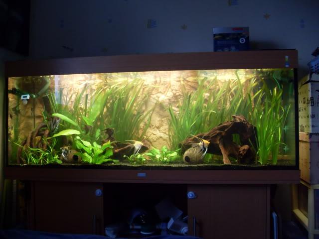 Débat sur le modèle d'un aquarium amazonien SDC11795