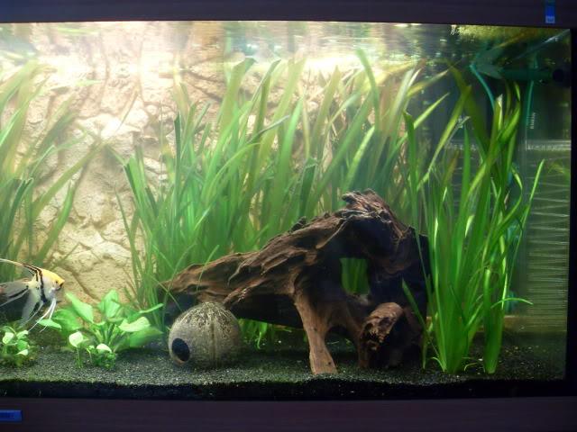 Débat sur le modèle d'un aquarium amazonien SDC11814