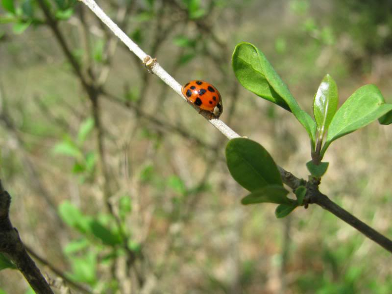 Slike insekata- buba IMG_6233