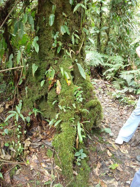 Costa Rica....ecoturismo!!!! ;) DSC02903