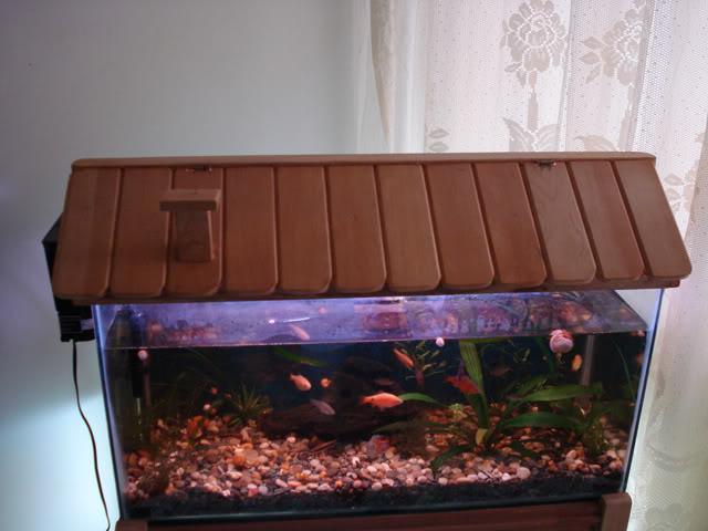 La presentacion de mi acuario!!!! DSC03312