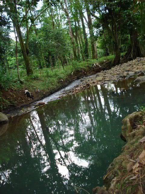 Pequeño rio de siquirres, Costa Rica Rio3