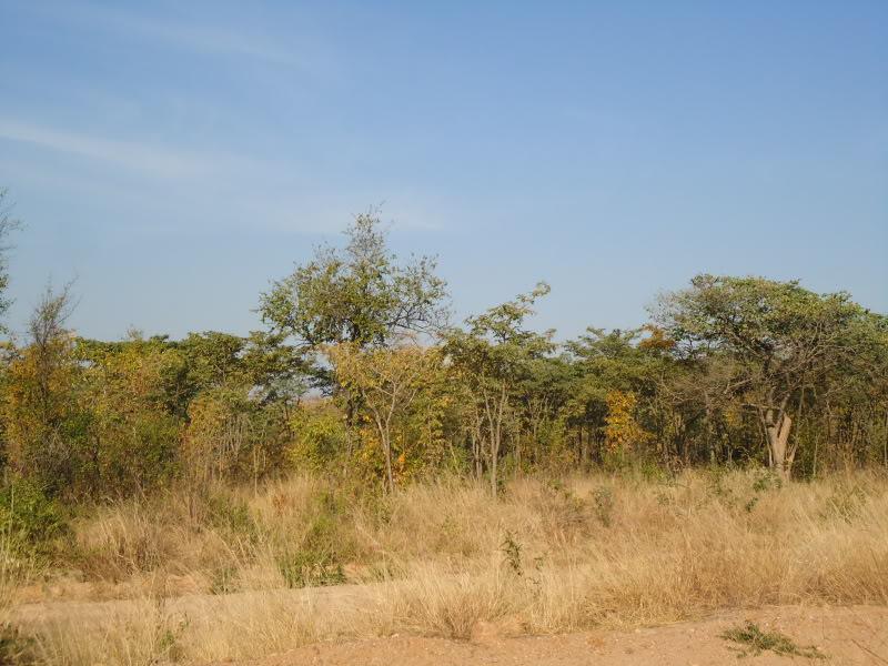 Angola   1193
