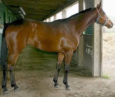 Aslan sees the horses moved in Joe_k1