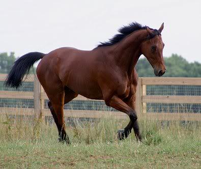 Aslan sees the horses moved in Joekelly2