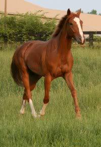 Aslan sees the horses moved in Shenandoah_King