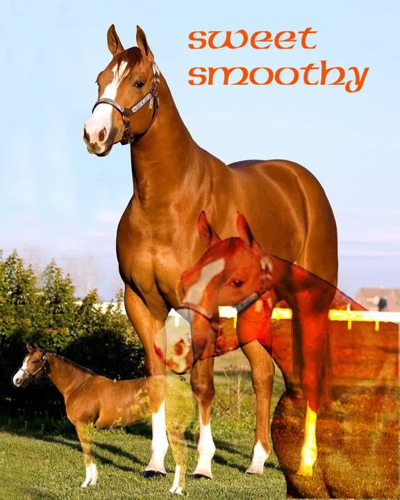 Aslan sees the horses moved in Sweet_smoothy_mare