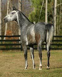 Aslan sees the horses moved in Willie_DuelnLitlJoe