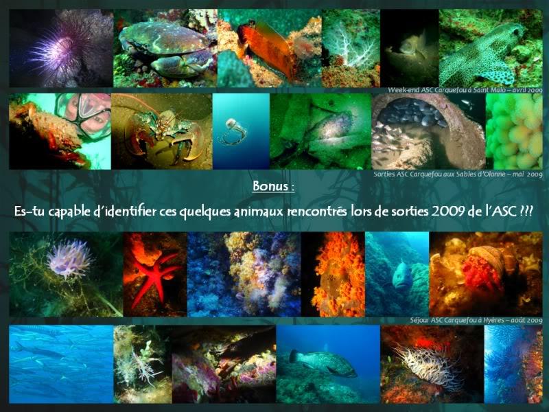Qui veut apprendre 2 ou 3 trucs en Bio Sous-marine ? Invitationpage2