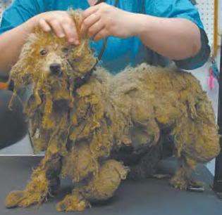 Πωλούνται ψυχές σε τιμή ευκαιρίας... Διαβάστε ΠΡΙΝ αγοράσετε Puppy20Mill-Dirty20Dog