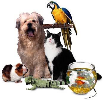 Πωλούνται ψυχές σε τιμή ευκαιρίας... Διαβάστε ΠΡΙΝ αγοράσετε Pet_collage